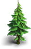 Small fir-tree