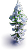 Snowy large fir-tree