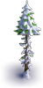 Snowy dry fir-tree